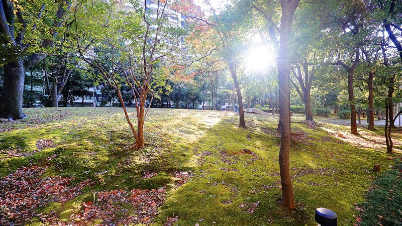 cover_photo.caption